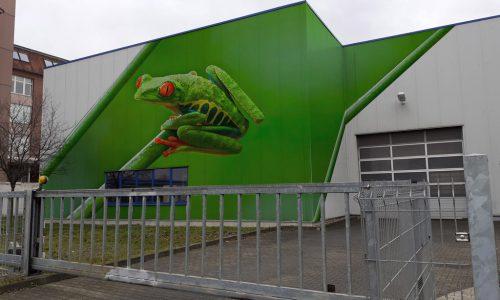 frog-Kopie-scaled